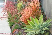 Grounds and Gardens / Gardens, fences, plants, birds, water, decorative and edible gardening