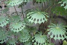 home plants / home plants ideas