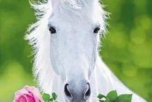 HORSES / Paarden