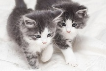 """My Cats and Kittens / """"Cats! Why not everyone else seems to be doing it!"""""""