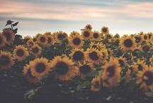 Flowers / flowers everywhere