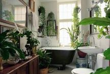 HOUSE PLANTS / Plants for our homes