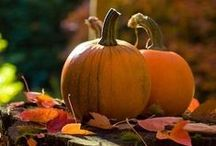 Harvest and Halloween (H&H) / by Tristany Gates