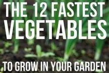 gardening / Gardening is a great peace of mind, healthy, community, exercise thing to do.  Here are some ideas....