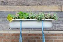 Gardening or flower power / For nature lovers: plants, flowers... Go green!