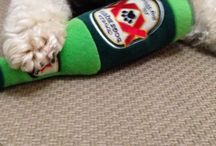 Toys / Cool pet dog toys