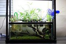 pretty indoor aquaponics
