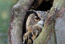 Compelling Owls / by Pilar Ugarte