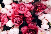 ◄▐ ▐ ► Forelsket / That overwhelming euphoric feeling you experience when you're falling in love with someone. Flowers.