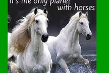 Horse Quotes and Inspiration / All the wonderful and Inspiring moments of Horses.  / by Abler Equine Pharmaceutical