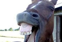 Horses & Humans in Funny Situations / Horse, Human Humor