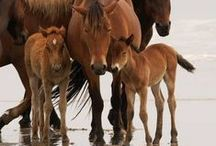 Horse Trivia / Test your horse knowledge about all things horse.