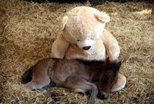 Adorable Minis and Ponies <3 / Some of the cutest minis and ponies from around the world. :-)