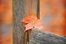 Just love fall / My favorite season