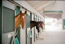 Equine Blog Posts / A good read for all horse enthusiasts.  The Abler team have a passion for everything about horses. We invite you to also share your experiences and love for horses with http://blog.abler.com/ / by Abler Equine Pharmaceutical