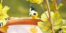 vtáčíky