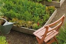 Organic Garden Tips / Great tips from all over Pinterest to help in your organic gardening adventure.