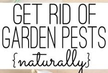 Pest Control / Assuring protection to your plants by utilizing eco-friendly techniques and products.