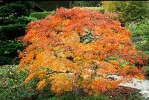 Splendid autumn - Prächtiger Herbst.