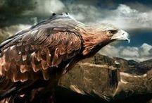 Eagle / falcon