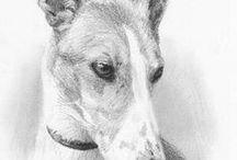 Animal / drawing