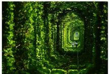 Verlassen / Wenn sich die Natur alles wieder holt...