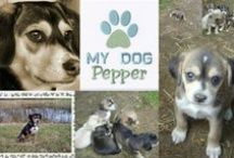 Pepper ❤ mijn hondje!♡/ my doggy / Pepper is een teefje 40cm hoog. Een actief, van alles wat mix-hondje. Die heel zachtaardig is en vooral graag achter tennisballetjes aan rent.
