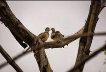 Oiseaux des Indes / Cet endroit est bien pour les ornithologues, l'inde a des nombreux endroits où vous pouvez voir les belles espèces d'oiseaux