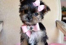 Puppy Dogs / by Marianne Scott