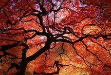 Biogarden  Arboles  Espectaculares / biogarden.es,  compartimos contigo una de nuestras grandes pasiones... la Naturaleza, con las mejores imágenes de los arboles mas espectaculares del planeta... La vida es un regalo   http://www.biogarden.es/