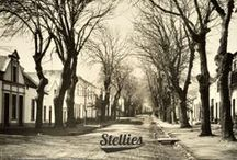 True to Our Roots / Stellies is our abbreviated name for the beautiful town of Stellenbosch, established in 1679 and situated near Cape Town, on the southern-most tip of Africa. Surrounded by mountains and wine-lands, and shaded by avenues of old oak trees, the town revolves around its university. Stellenbosch is a town that has shaped the history of South Africa but has, more importantly, evolved into an eclectic alternative space that continues to inspire and influence.