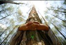 abracem els arbres