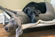 Dogs Who Share / by Kuranda Dog Beds