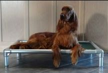 Irish Setter / Irish Setters and their Kuranda dog beds! / by Kuranda Dog Beds