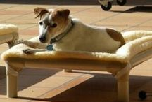 Jack Russel Terrier / Jack Russel Terriers and their Kuranda beds! / by Kuranda Dog Beds