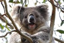 .animals australia