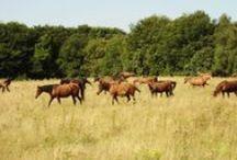 Moodboard / Hof Mabrouck: Waar paarden nog paarden kunnen zijn! Zorgeloos, vertrouwen, vrijheid, deskundigheid, natuur.
