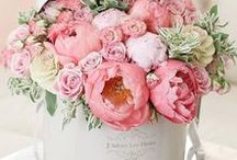 Flower Arrangements / If you love to fill your home with the beauty of flowers, this is the place for you. You'll find inspiration for arranging, creatively displaying, and enjoying flowers of all types. Add beauty to your home decor with these easy flower arranging ideas.