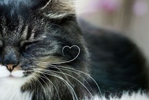 Animal Friends / Bundles of cuteness! / by Caroline