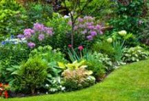 In Your Garden / Gardening ideas and advice to help your garden flourish / by Better Homes and Gardens Australia
