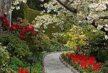 garden / by Janie Mcduffie