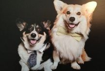 My Love of Corgis / by Sarah Margaret