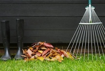 Autumn in the Garden / All you need to know about Autumn garden planting and maintenance.