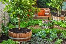Veggie garden ideas / by Better Homes and Gardens Australia
