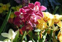 Botanical Garden in Balboa Park, San Diego / Beautiful Orchids in the Spring and Poinsettias in the Winter