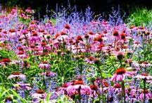 Garden / Gardening. Flowers. Vegetables. Herbs. Decor. <3  / by Melissa Dadich