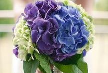 Flowers - hydrangeas / by English Wedding Blog