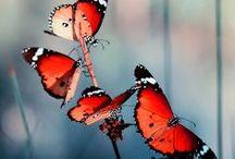 wing / butterflies are self propelled flowers