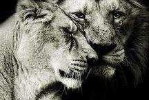Animals ♞