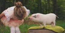 Babe, the Sheep Pig